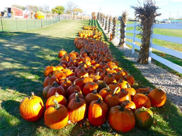 From fall festival games to leaning about the season, here are some ideas for celebrating autumn with kids.