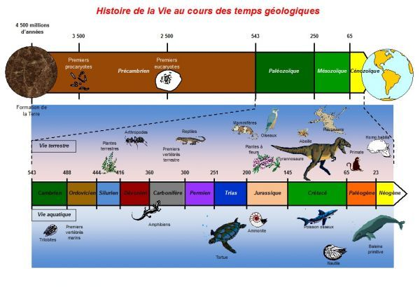 TÉLÉCHARGEMENT SCHÉMA FRISE GÉOLOGIQUE CHRONOLOGIQUE : HISTOIRE DE LA VIE AU COURS DES TEMPS GÉOLOGIQUES - Intellego.fr
