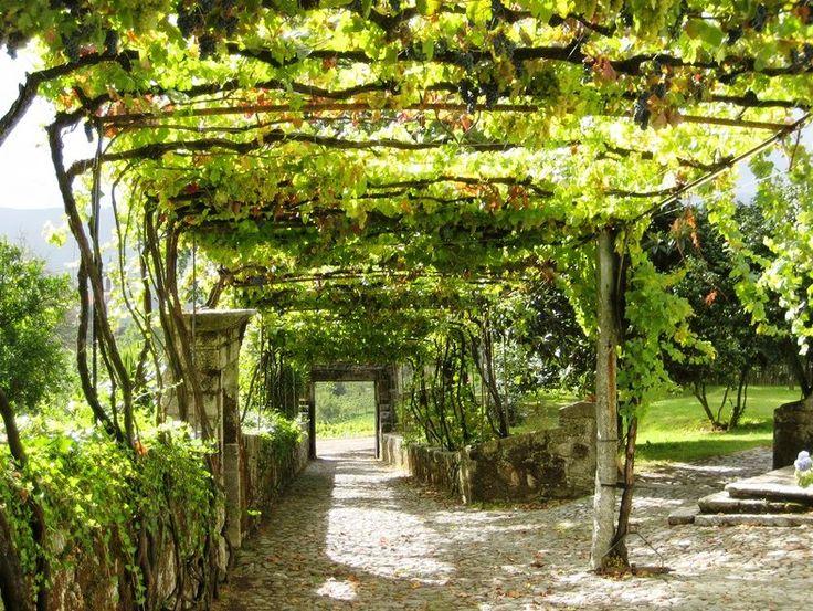 виноградные арки фотогалерея совет