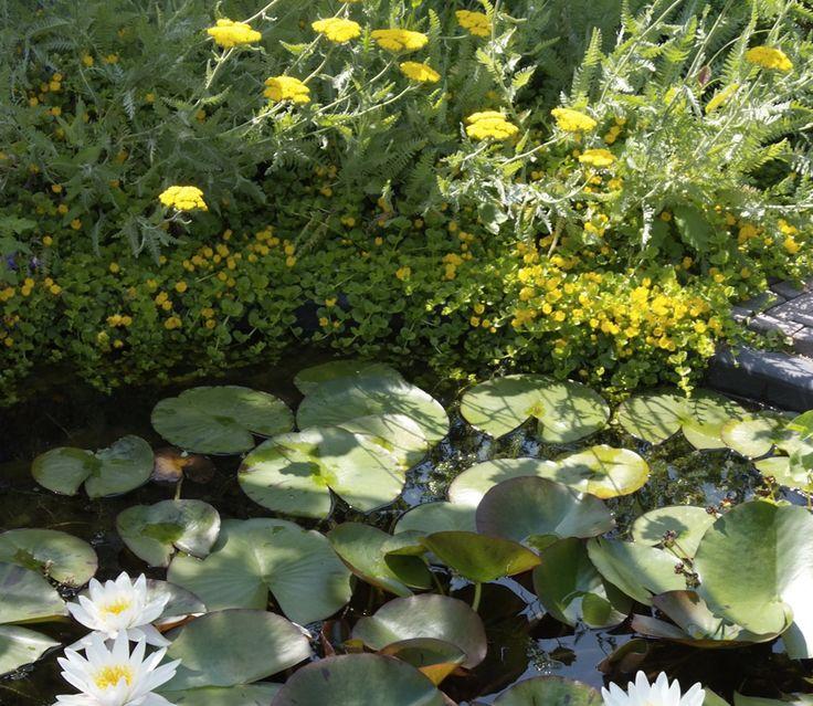 62 Besten Gartenteich Bilder Auf Pinterest Gartenteiche