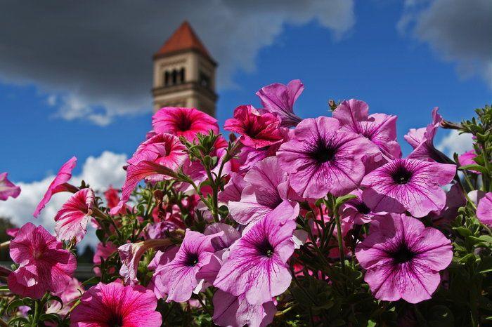 Hanging Flower Baskets Spokane : Best images about summer lovin on gardens