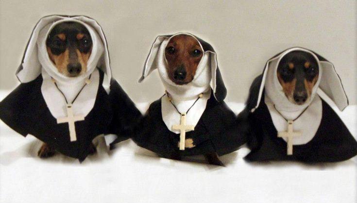American Horror Story :: The Doxie Asylum #dachshund #halloween #costume