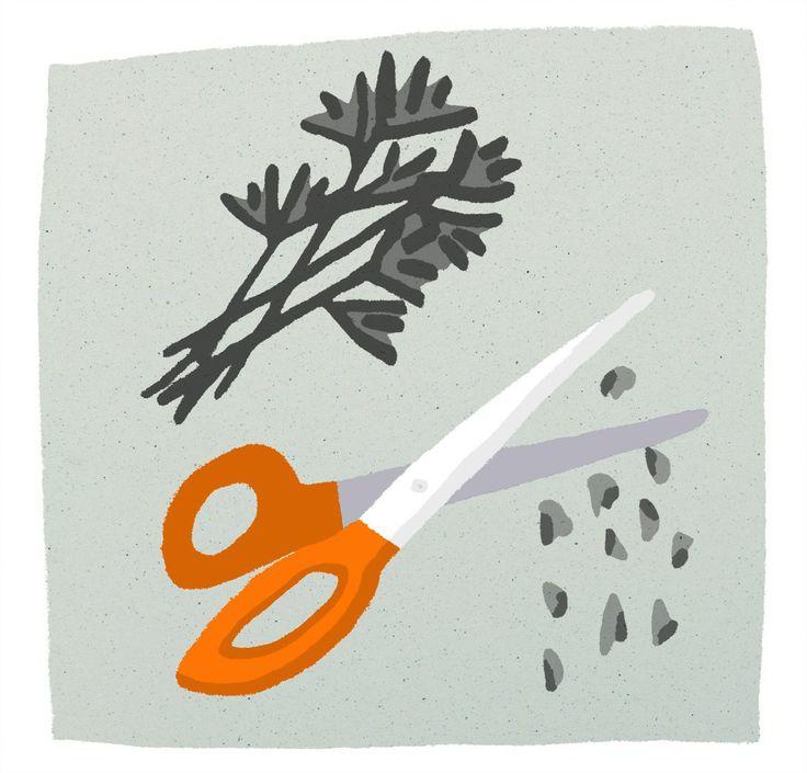 Scissors & parsley