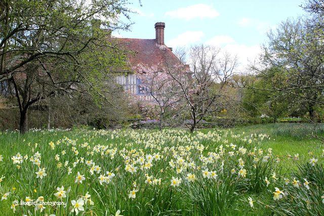 Madelief - Great Dixter Housen and Gardens