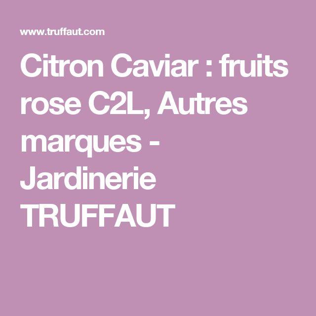 Citron Caviar : fruits rose C2L, Autres marques - Jardinerie TRUFFAUT