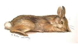 """Tasha Tudor...really reminds me of the bunny """"young Beatrix"""" was drawing in the movie, Miss Potter."""