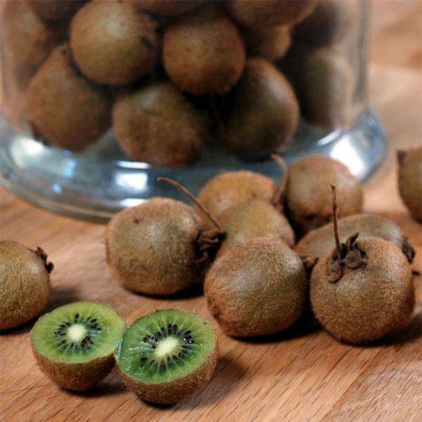 Kiwi Jenny (autofertile) - Actinidia deliciosa