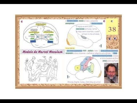 Neurología 13 - Localización de Nombres propios y comunes - Prof. Manuel...