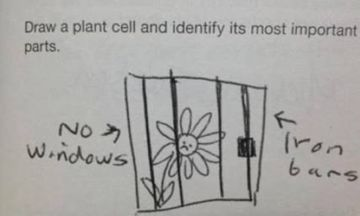 48 Kids' Exam Answers That Will Make You Belly Laugh