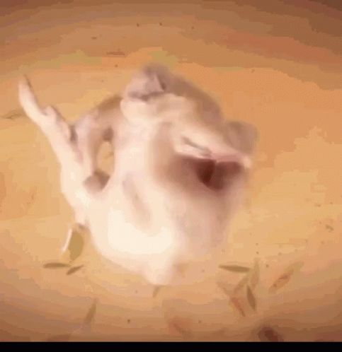 Turkey Dance Happy Turkey GIF - TurkeyDance HappyTurkey - Discover & Share GIFs