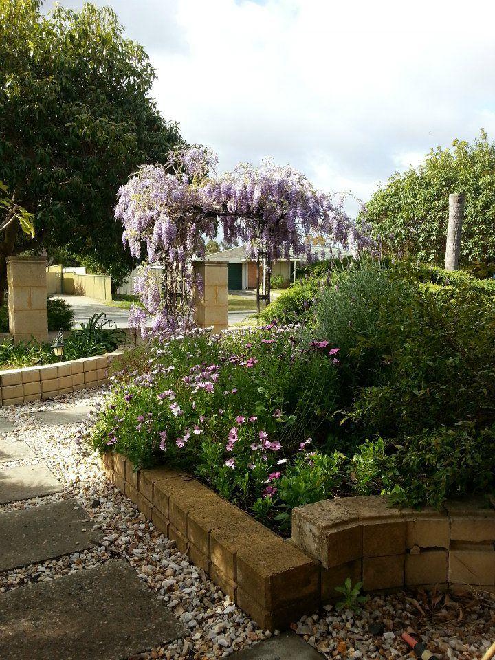 Garden Ideas Perth 69 best my garden plants (perth wa) images on pinterest | garden