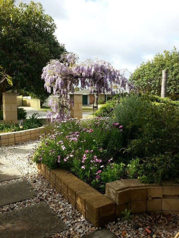 69 best My Garden Plants (Perth WA) images on Pinterest