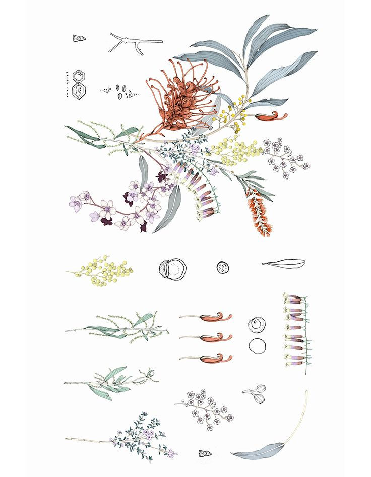 The Collector pillowcase, © Edith Rewa botanical artist from melbourne. this is for a cotton pillowcase