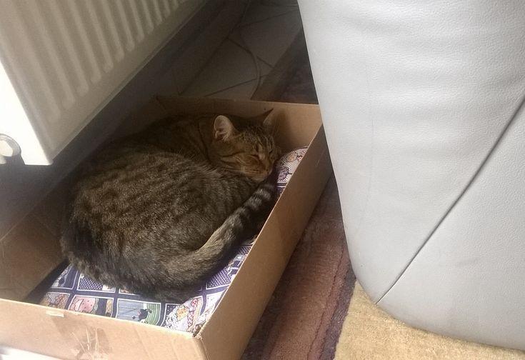 """Téli macskadolgok - Vannak dolgok, amiket csak télen csinálok. Az igazi kemény hideg télben, mint az ideiben.  A többi évszakban, nyáron, ősszel és tavasszal ezeknek nincs helye… - Ilyen, a ház köré szegődött macska (Marcipán) napi két-háromszori beengedése a nappaliba. Egy """"vérbeli"""" kinti macskának a napi húsz óra kint, négy óra bent tartózkodás - úgy tűnik - ideális. A teraszajtó előtt kijelölt etető helyet azonnal birtokba vette... (Fotó - Németh György)"""