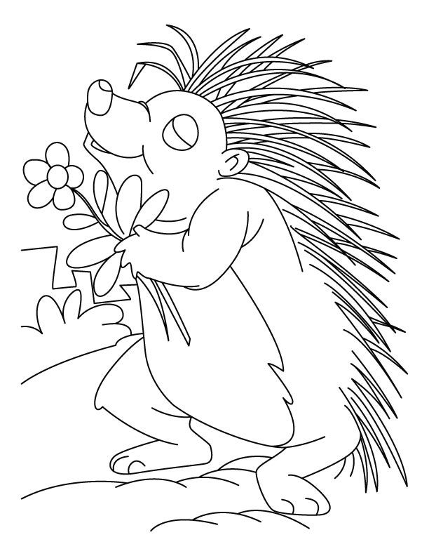 Porcupine Coloring Pages Best Coloring Pages For Kids Animal Coloring Pages Coloring Pages Porcupine