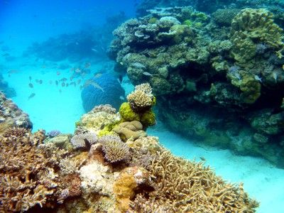 What to do in Lifou - New Caledonia
