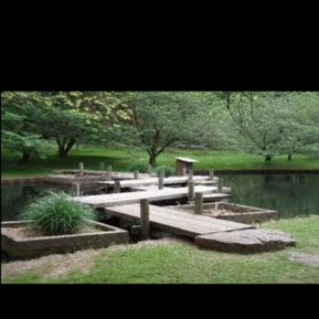 Koi Ponds And Gardens: 119 Best Images About A Memphis Thang! On Pinterest