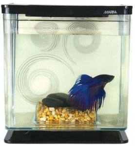 44 best betta fish tank ideas images on pinterest fish for Caring for a betta fish in a bowl