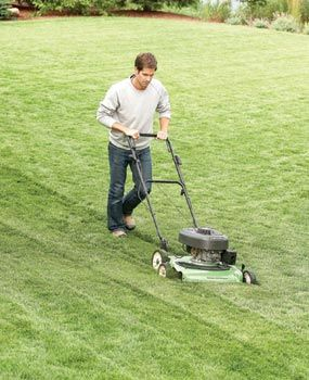 DIY:  How to go from a  scraggly lawn to a golf course lawn in one season.