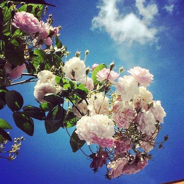 Walking in #trastevere #roma #rome  #flowers #fiori #clouds #nuvole #cielo #sky #italy #italia