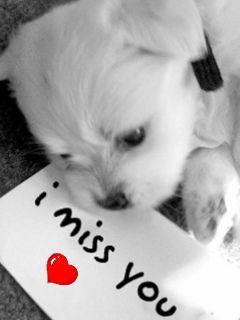 Imagen de amor con frase en ingles - http://www.cristianas.com/Imagenes-de-Amor/imagen-de-amor-con-frase-en-ingles.html
