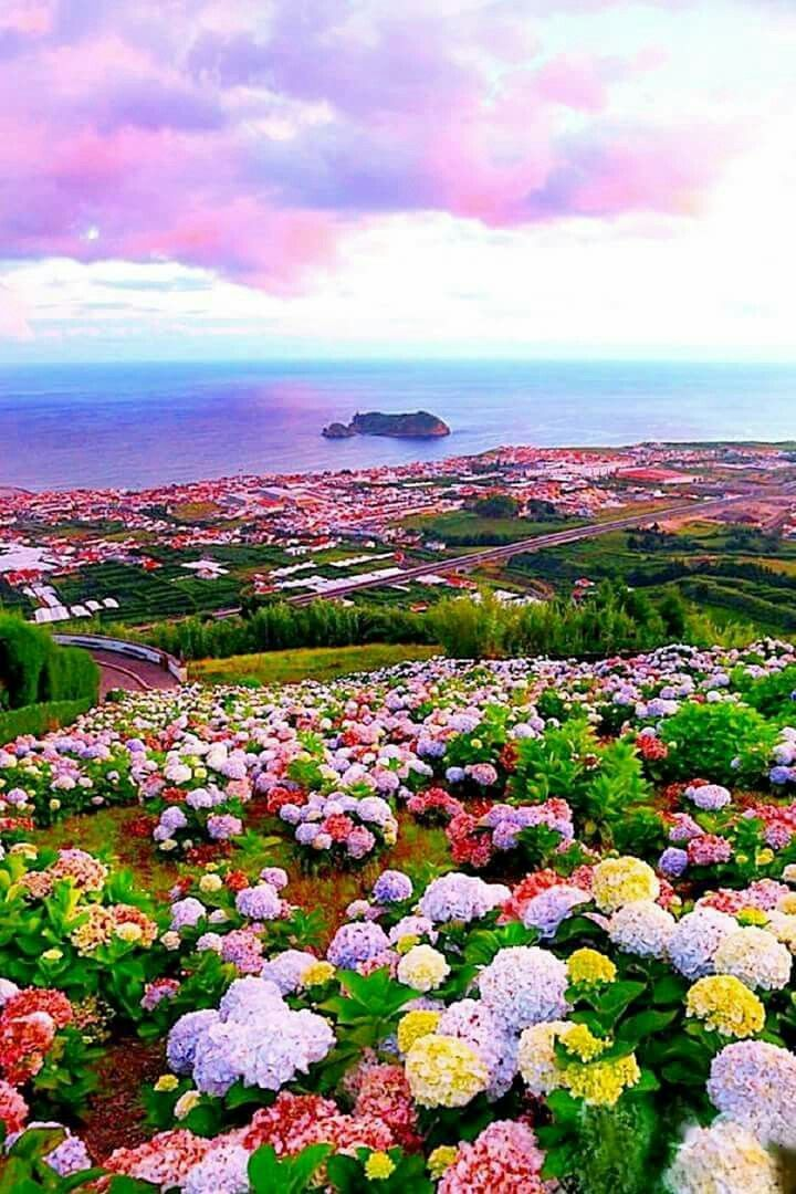 Amazing Colors Enjoy The Splendor Beautiful Nature Beautiful Flowers Beautiful Places