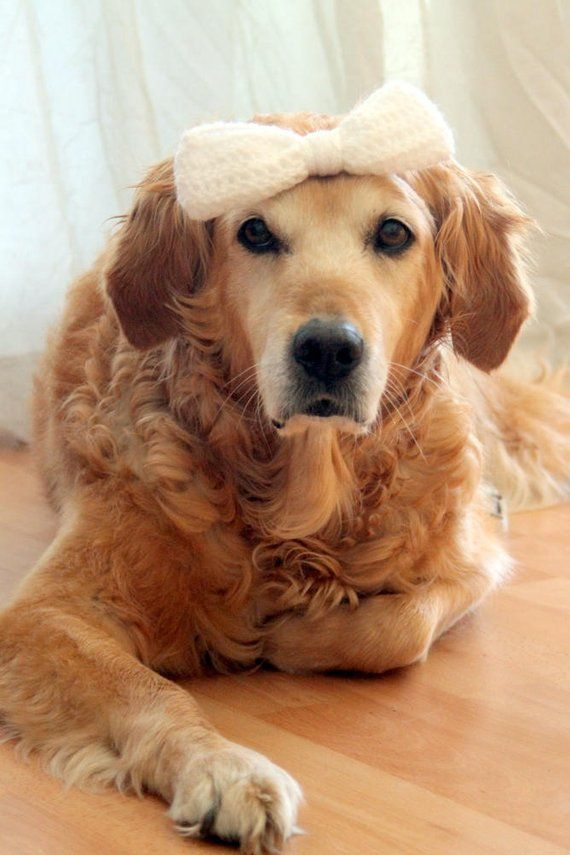 Dog Bow Headband Bow Tie Collar For Small Medium Or Large