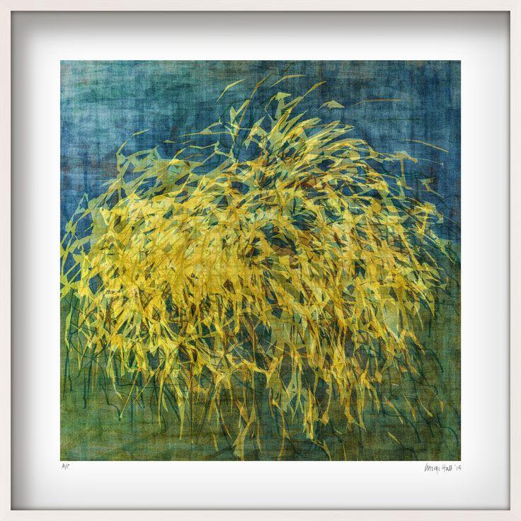 Wanaka pampas grass in white frame ed 24 of 25 art