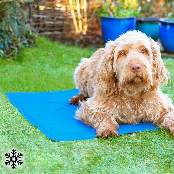Cooling Mat for Pets - Geeks Buy Gadgets