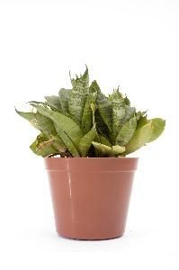 House Plants That Require Little Light & Water