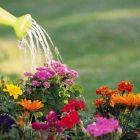 Чем заняться на даче в мае? План работ для садоводов
