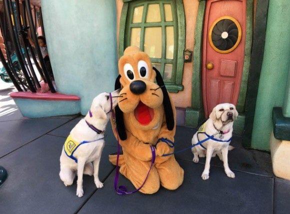 ディズニーランドでじっと座って似顔絵を描いてもらっていた介助犬のかわいさにキュン死者続出 : カラパイア