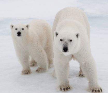 Ask world leaders to create a global sanctuary in the uninhabited area around the North Pole and a ban on oil drilling and industrial fishing in Arctic waters.