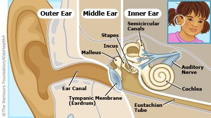 134 best Hearing Explained and Explored images on Pinterest