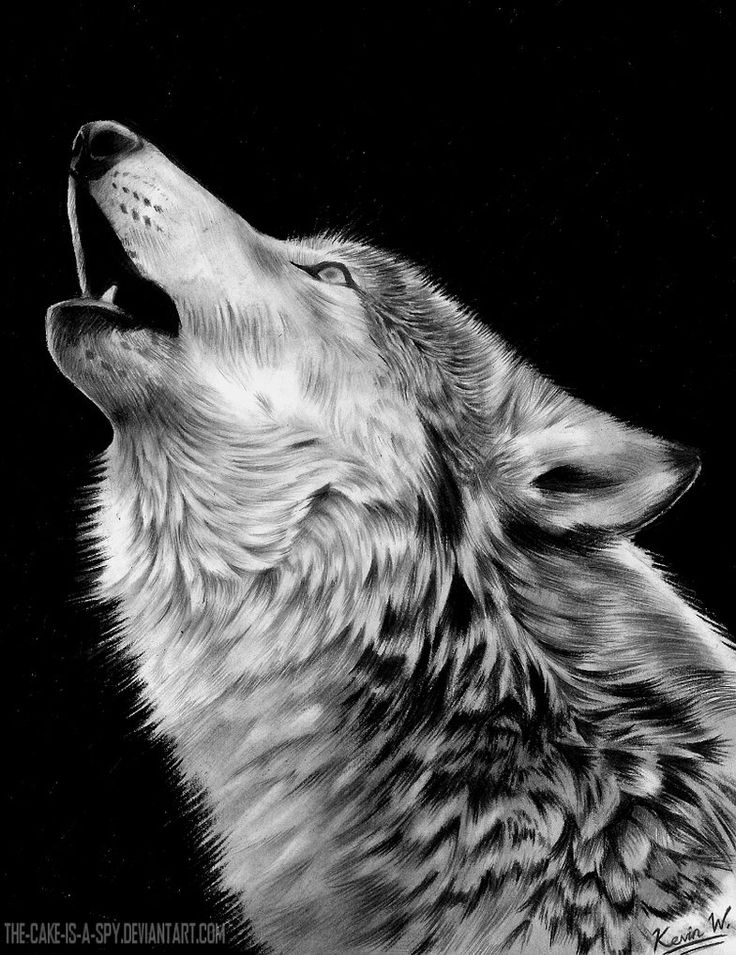 Howling Wolf by Spectrum-VII on DeviantArt