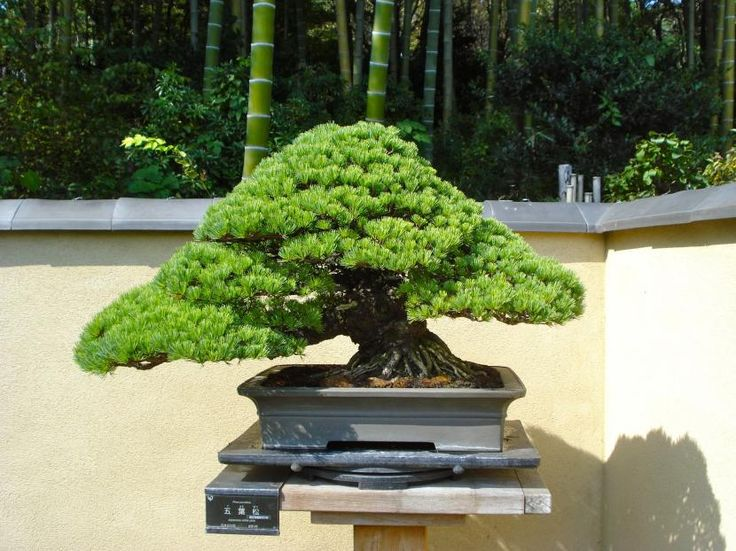 ¿Se pueden comprar bonsáis en verano? - http://www.jardineriaon.com/se-pueden-comprar-bonsais-en-verano.html