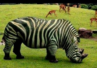 Maybe if I changed my skin to stripes I could confuse the poachers who hunt me for my horn?