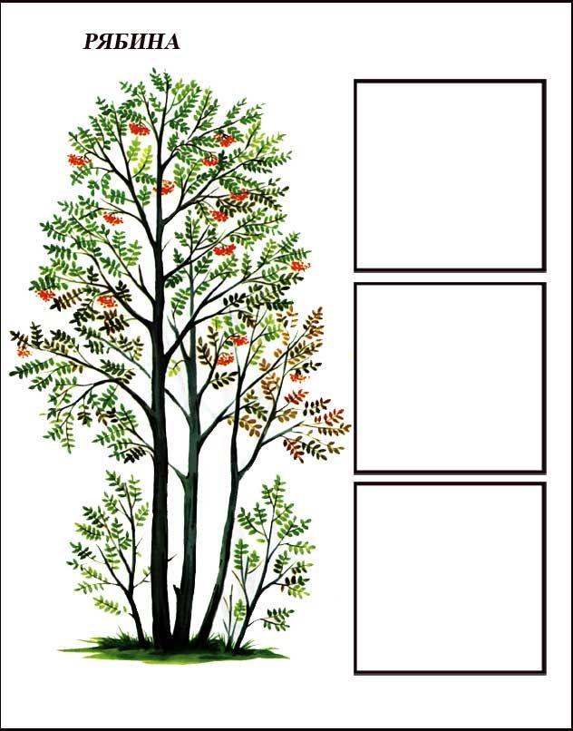 igra-derevya-ryabina-1.jpg (632×806)