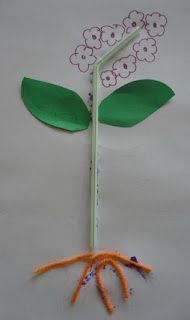 So many wonderful preschool science experiments (I particularly love this flower diagram)