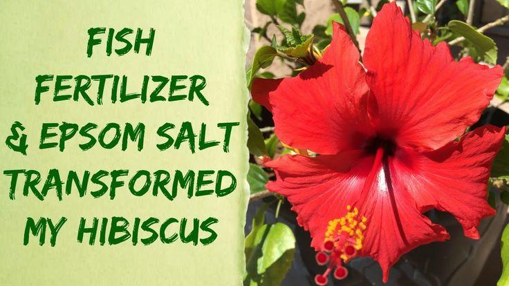 15 Best Organic Gardening Tips Fertilizers Watering 400 x 300
