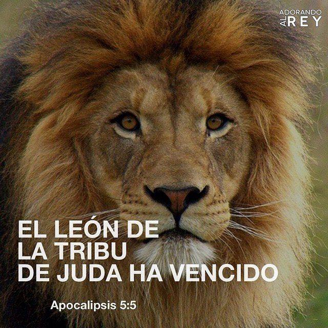 He aquí que el León de la tribu de Judá, la raíz de David, ha vencido para abrir el libro y desatar sus siete sellos. Apocalipsis 5:5 #Dios #Jehova #GranYoSoy #Jesus #Jesucristo #JesusCristo #Cristo #VerboDeDios #HijoDeDios #EspirituDeDios...
