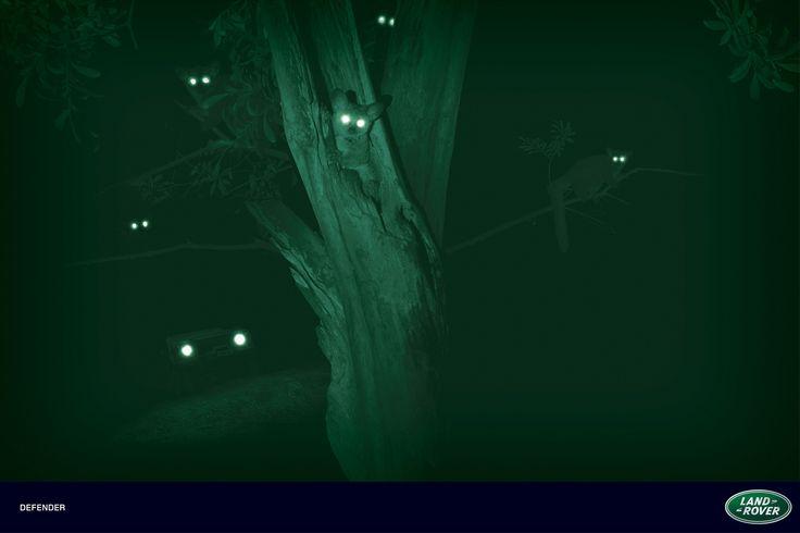 Land Rover Defender: Night Eyes, Bush Baby