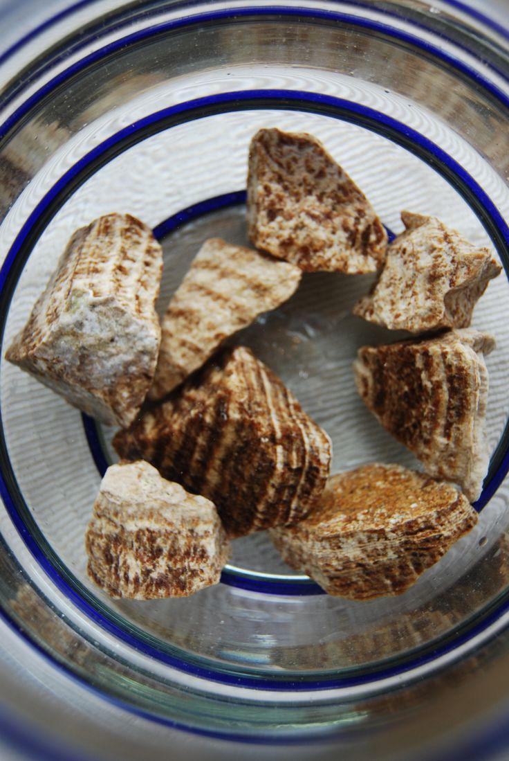 Der Aragonit ist ein Calcium-Carbonat und baut Knochen- und Muskelgewebe auf. www.gesundheitsberatung-im-spreewald.de
