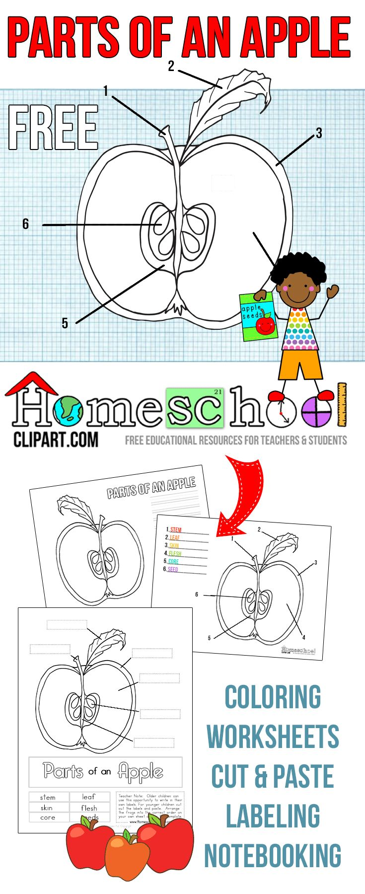 54 best images about Fall Unit Study- PreK on Pinterest