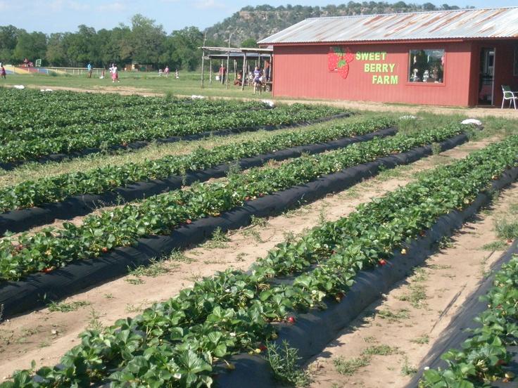 Sweet Berry Farm In Marble Falls Tx Sweet Berry Farm