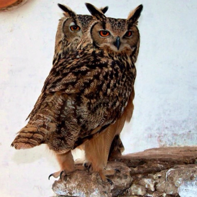 Wise owls | Owl, Wise owl, Animals