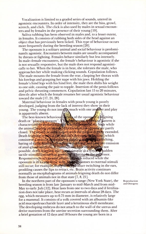 Fox print on page of the Handbook of Canadian mammals by CooperHaydenn, $10.00
