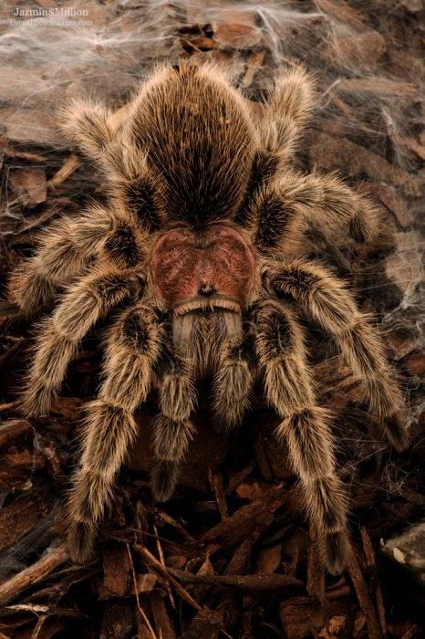 Много пауков картинка