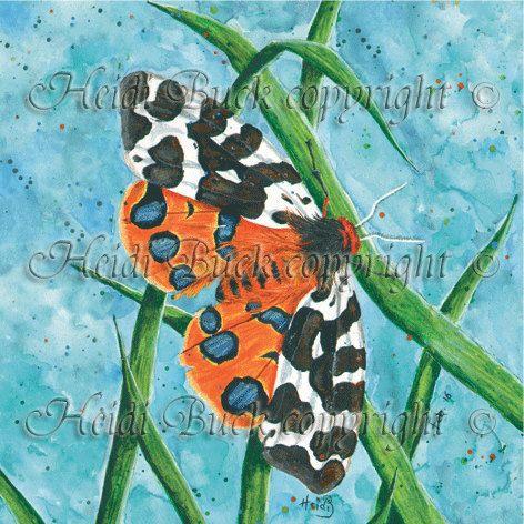 Garden Tiger Moth Greetings Card