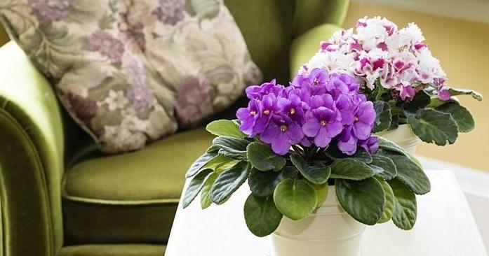 7 plantas de interiores con flores que son todo un encanto